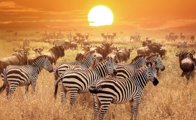 Basic Things Tourist Need to know before Travelling to Kenya