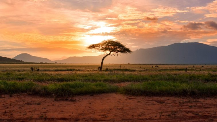 Visiting Africa: The Cradle of Mankind?