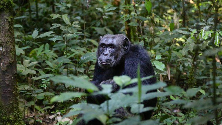 Visiting Uganda- The Pearl of Africa
